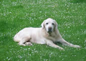 Ch. Cornlands Rupertbear - May 2006